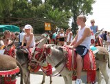 Costa del Sol donkey taxis awarded charter of workers' rights