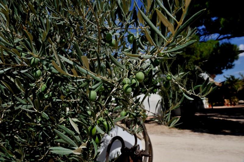 Yecla Wine Route: Almazara Deortegas in Yecla