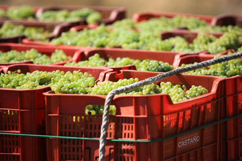 Yecla Wine Route; Bodegas Castaño